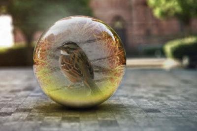 pássaro dentro de bola de vidro ilustrando o período de distanciamento social devido à Covid-19.